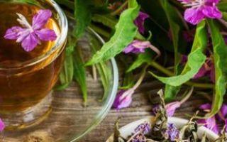 Иван-чай: сведения о лекарственном растении, показания и противопоказания к применению, народные рецепты
