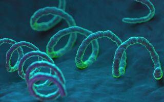 Нейросифилис: что это такое, как проявляется, методы диагностики и лечения