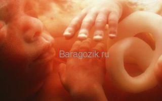 23 неделя беременности: развитие плода и ощущения мамы, рекомендации гинеколога