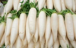 Дайкон: полезные свойства и противопоказания к употреблению, применение в народной медицине, косметологии и кулинарии