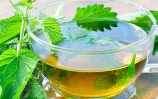 Польза и вред крапивы, применение растения в народной медицине, противопоказания к употреблению