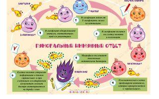 Почему ребенок часто болеет в детском саду: признаки и симптомы ослабленного иммунитета