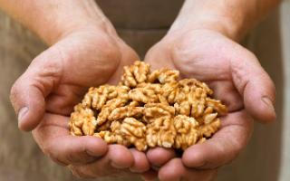 Грецкие орехи при грудном вскармливании: польза и возможный вред, влияние на молоко, правила употребления