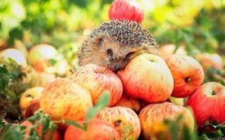 Яблочный сок: состав и полезные свойства, применение напитка для профилактики рака и сердечно-сосудистых заболеваний
