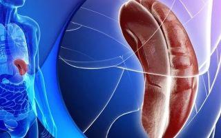Спленомегалия селезенки: что это такое, причины и симптомы патологии, эффективные методы лечения