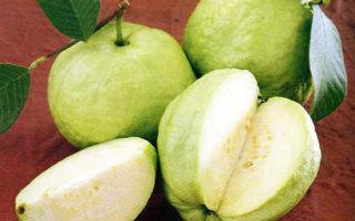 Гуаява: польза и вред, пищевая ценность, применение в народной медицине