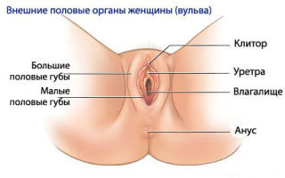 Как исправить дряблые и обвисшие половые губы – есть ли шанс вернуть молодость интимному органу?