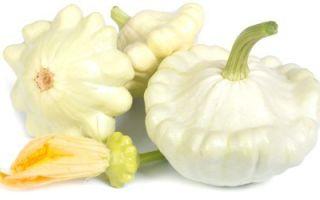 Полезные свойства патиссонов, состав и пищевая ценность, правила приготовления и хранения тарельчатой тыквы