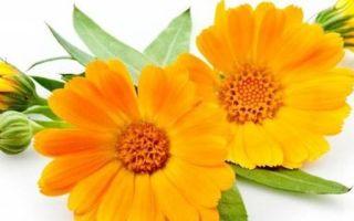Лечение трещин на пятках: причины и устранение в домашних условиях
