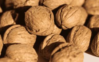 Грецкие орехи: состав, калорийность, польза и вред для организма