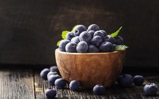 Полезные свойства черники: пищевая ценность и химический состав, рецепты приготовления