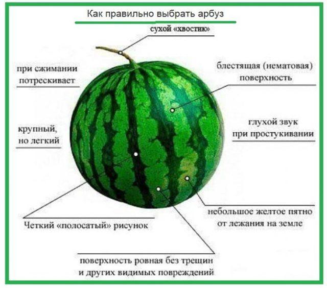 Арбуз: польза и вред, пищевая ценность и состав арбуза, применение арбуза в медицине и косметологии
