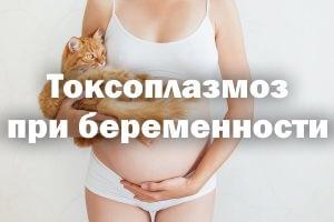 Что такое токсоплазмоз, чем он провоцируется, причем тут кошки, вред при беременности, симптомы поражения плода, выявление