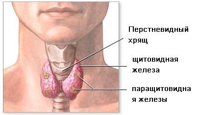 Рак щитовидной железы: симптомы и лечение, методы диагностики, факторы, способствующие развитию рака щитовидки, профилактика