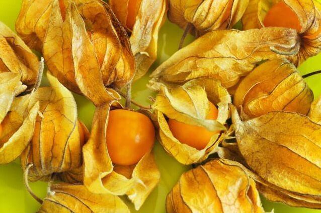 Физалис: полезные свойства, пищевая ценность, химический состав, применение