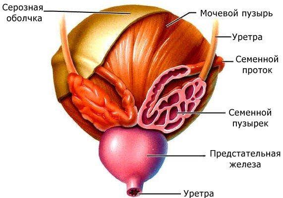 Везикулит: симптомы и лечение, как лечить везикулит, диагностика острого и хронического везикулит у мужчин