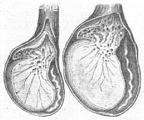 Боль в яичке у мужчин: причины тянущей боли в правом и левом яичках