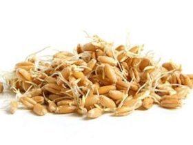 Полезные свойства кус-куса, пищевая ценность и химический состав, вред кус-куса для организма, применение в кулинарии