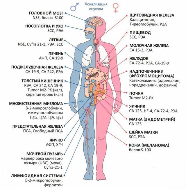 Какие онкомаркеры показывают рак кишечника