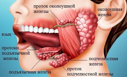 Сиаладенит: причины развития заболевания, клинические проявления, возможные последствия и лечение