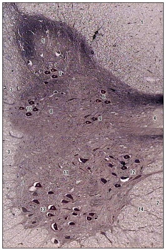 Аргироз: что это такое, фото, симптомы у детей и взрослых, лечение аргирии, риски