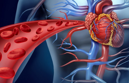 Средства для укрепления сердца и сосудов   ОкейДок