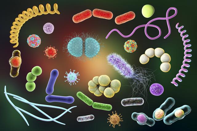 Чем можно заразиться в общественных местах: пути передачи инфекционных, венерических, кожных заболеваний