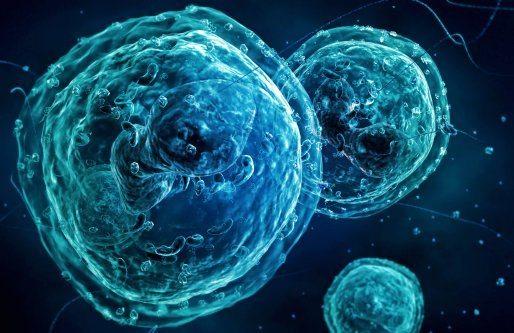 Гранулоцитопения: то это такое, симптомы и лечение гранулоцитопении