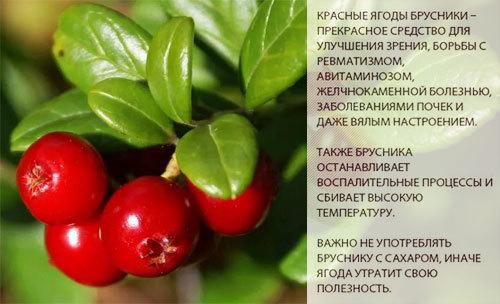 Полезные свойства брусники, ее состав и калорийность, правила употребления.