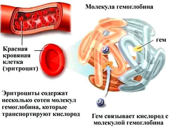 Повышенный гемоглобин у женщин: причины, симптомы, методы лечения и диета при повышенном гемоглобине у женщин.