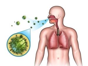 Как вылечить ОРВИ народными средствами: отвары и травы при простуде и гриппе