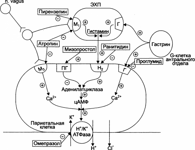 Квамател: инструкция по применению, состав, аналоги, побочные эффекты