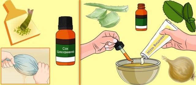 Цикламен для лечения гайморита: как приготовить капли с цикламеном