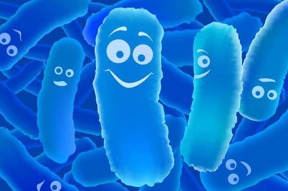 Чем отличается закваска молочных бактерий от закваски молочных культур?