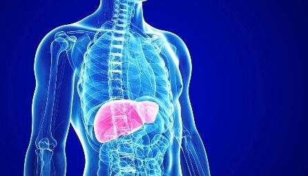Аутоиммунный гепатит: симптомы и лечение, диагностика, прогноз выживаемости