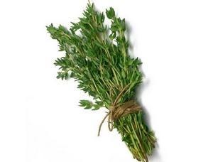 Чабрец: лечебные свойства и противопоказания тимьяна, применение чая с чабрецом
