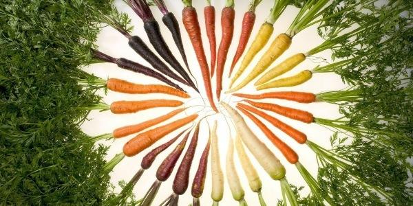 Польза и вред моркови, химический состав моркови, как выбрать и сохранить морковь.