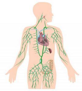 Рентген и компьютерная томография легких как методы диагностики туберкулеза и других патологий легких