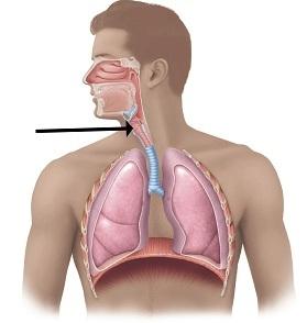 Какие первые признаки туберкулеза гортани и как диагностировать туберкулез гортани