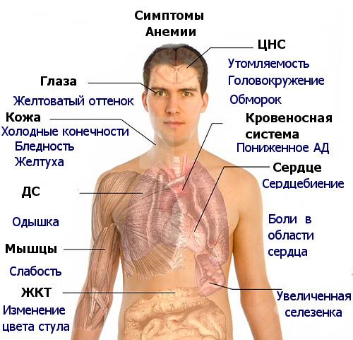 B12 дефицитная анемия лечение