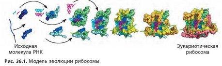 Молекулярно-генетические исследования, способы их проведения и виды.