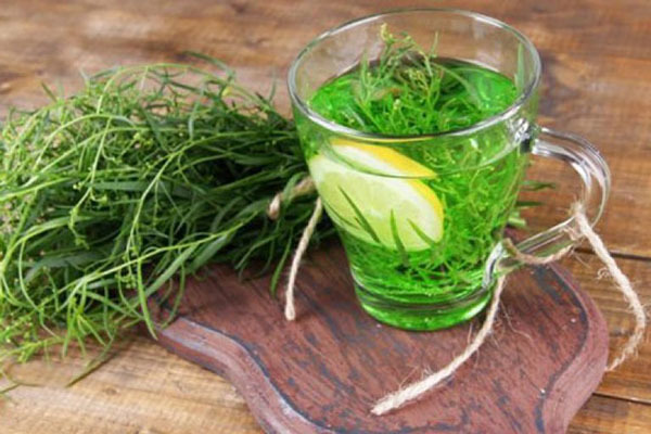 Эстрагон – полезные свойства растения, возможный вред, области применения эстрагона