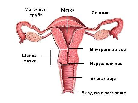 Синдром истощения яичников: причины, диагностика, симптомы и лечение