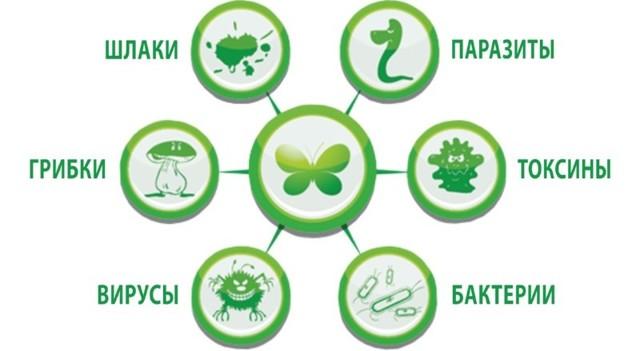 Очищение организма от токсинов и шлаков, методики очищения кишечника, рецепты очищения организма