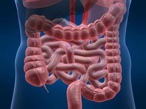 Синдром раздраженного кишечника: диета №3 и №4 при синдроме раздраженного кишечника, диета при запоре и диарее