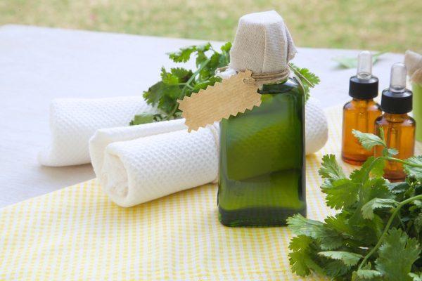 Полезные свойства кинзы, ее состав и пищевая ценность, вред кинзы и правила употребления