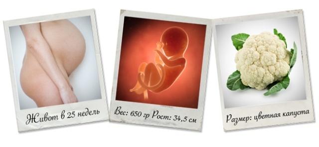 25 неделя беременности: развитие плода, рост и вес, самочувствием будущей мамы