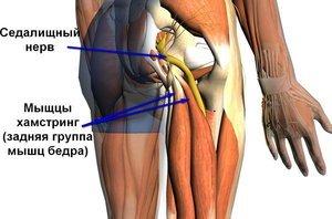 Ноет нога от бедра до колена в состоянии покоя: причины, что делать, какой врач лечит