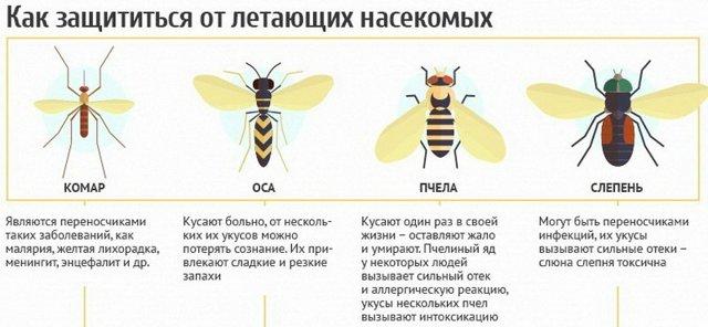 Укусы жалящих насекомых у детей – осы, пчелы, шмели, шершни, чем опасны, как проявляются, что делать для уменьшения зуда и красноты, боли
