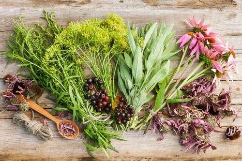 Травы при панкреатите поджелудочной железы, что нельзя пить